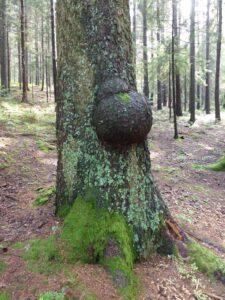 tree-480908_1920